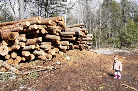 stacks of old growth hemlock logs cut by the BMFC